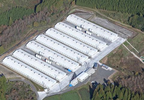 種鶏から製造までを自社で一貫して行う集約的種卵生産
